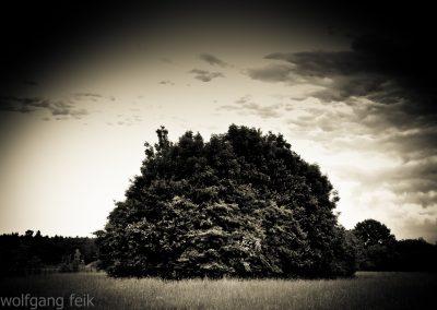 nature (14 von 58)