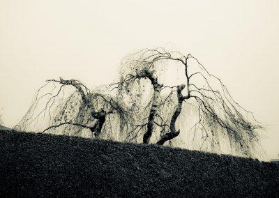nature (8 von 58)